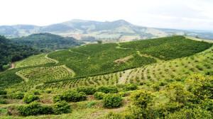 Кофейные плантации Бразилии